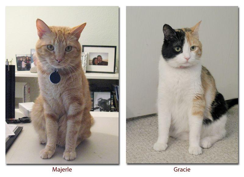 Cats-Passport Photos